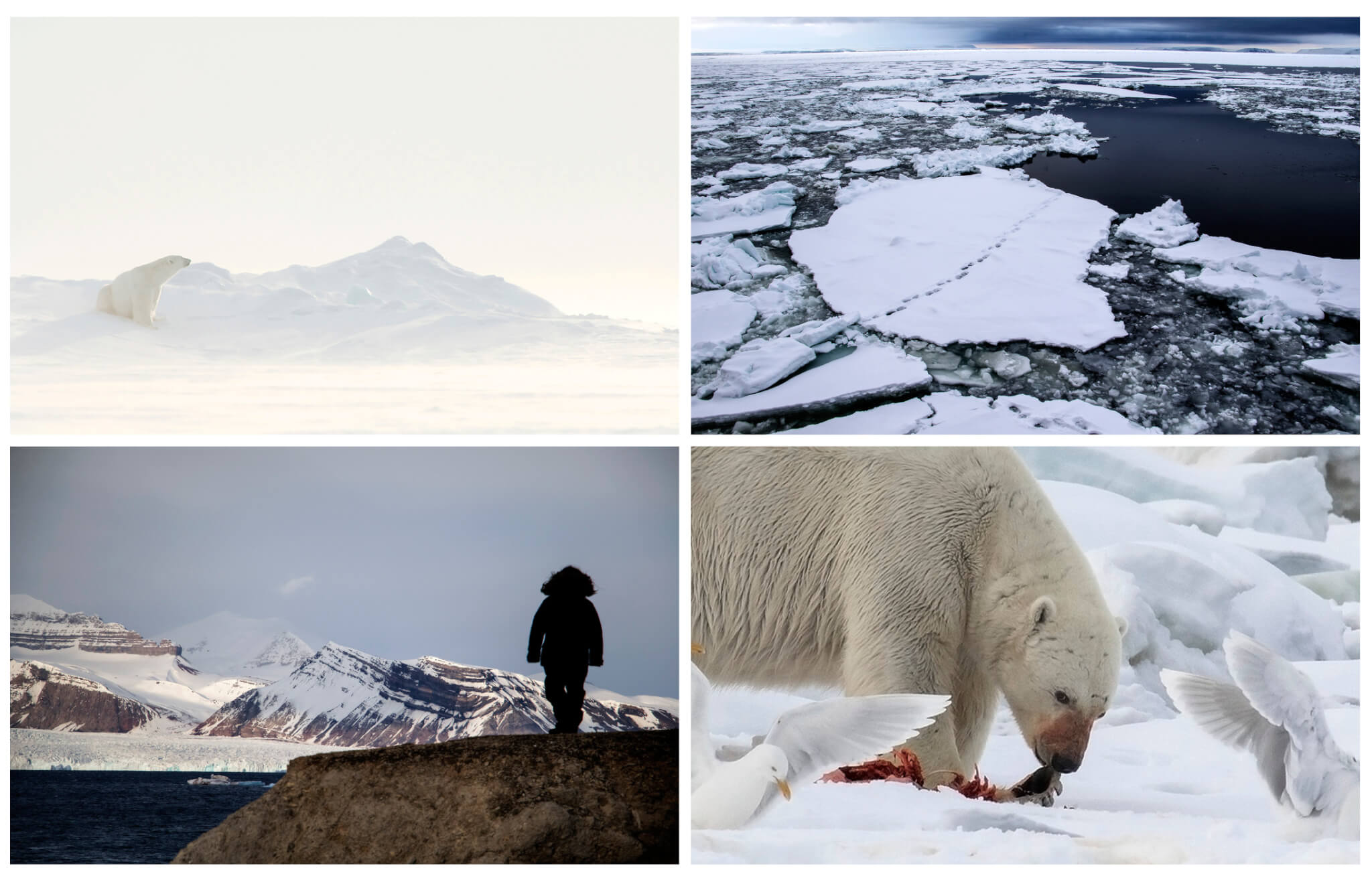 Pictures from Svalbard, ice and polar bears