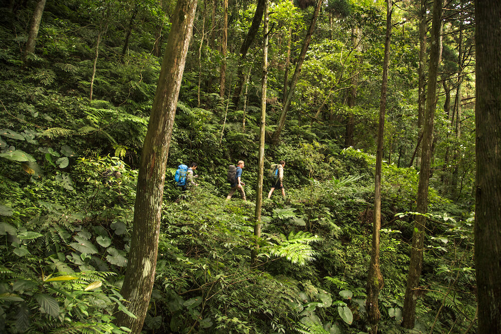 Trekking in the rainforest