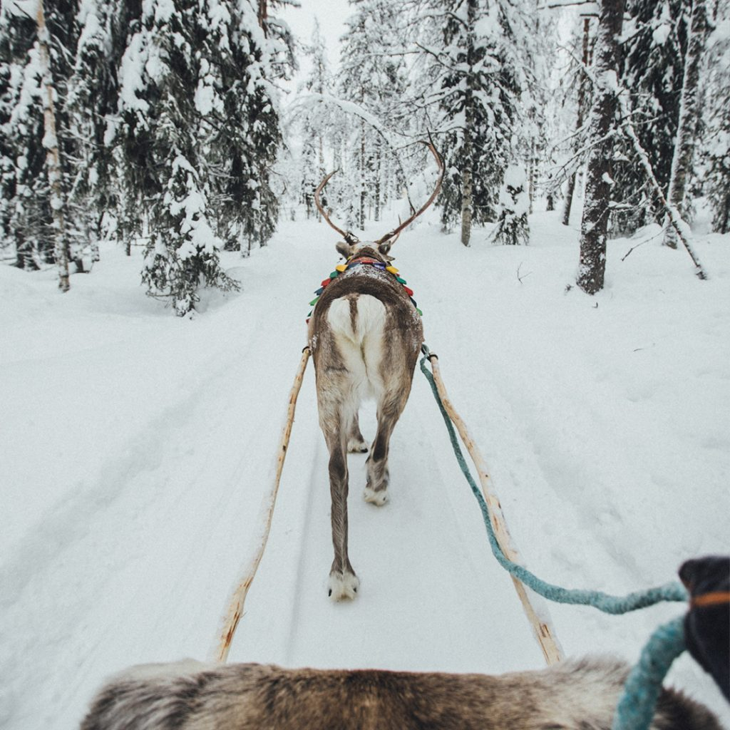 Getting a lift by a reindeer