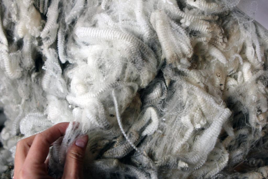 Sorting through wool