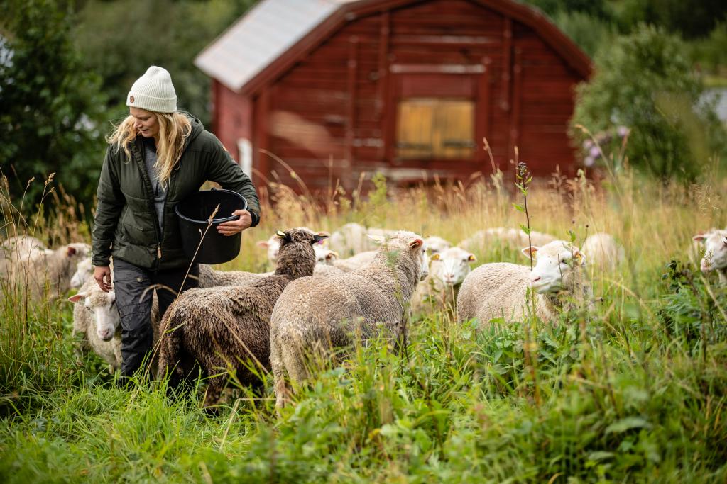 Caring for sheep, Brattlandsgården