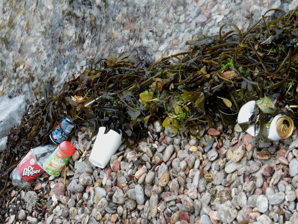 the Beach Clean Network Limited